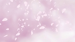 Falling pink rose petals or cherry tree blossoms. Slow motion. Stock Footage