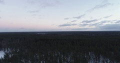 Aerial forward flight with tilting down over winter pine forest in evening Stock Footage