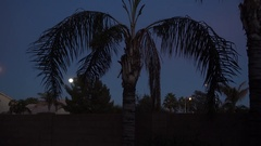 Night Establishing Shot of Typical Arizona Residence Back Yard  	 Stock Footage