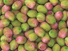 Aerial Perspective on a Pile of Mangoes Stock Illustration
