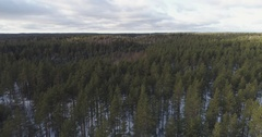 Aerial backwards flight over winter pine forest in daylight Stock Footage
