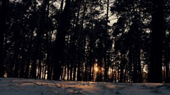Sunset in the winter frosty Christmas forest Stock Footage