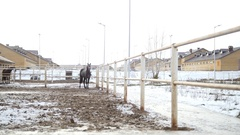 Black horse in the stable at winter day snorts steam from the nostrils Stock Footage