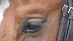 Close up view of the eye of a horse. Equine eye blinking. Slow motion Stock Footage