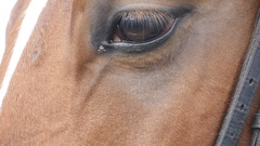 Equine eye blinking. Slow motion Stock Footage