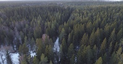 Forward flight over winter fir forest in daytime Stock Footage