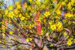 Lunar new year lucky decoration objects. words mean best wishes and good lu.. Stock Photos