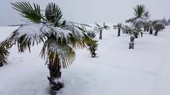 Palm trees covered with snow in Batumi, Georgia. Stock Footage