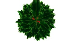 Rapidly Growing Bouquet of Green Holly Leafage with Red Berries - Alpha Channel Stock Footage