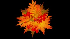 Rapidly Growing  Autumn Leafage -     Video Footage  with Alpha Channel Stock Footage