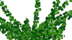 Rapidly Growing  Green Sprouts with White Flowers -     Alpha Channel Stock Footage