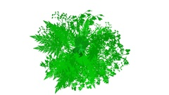 Rapidly Growing  Green Leafage -     Video Footage  with Alpha Channel Stock Footage