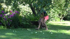 Gardener girl gathering windfall rotten apples fruits to wheelbarrow in farm Stock Footage