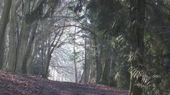 Mist footpath in Sulham wood Stock Footage