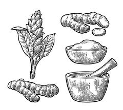 Turmeric root, powder and flower with pestle and mortar. Stock Illustration