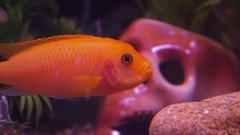 Skull in an aquarium with fish. Stock Footage