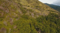 Trees and vegetation on the mountainside. Camiguin island Philippines Stock Footage