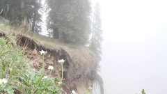 Fog in mountainous terrain quickly spreading among spruce trees Stock Footage