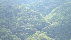 Time-lapse view of mountain slopes clothed in primary montane rainforest  Stock Footage