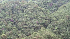 Time-lapse view of a mountain slope clothed in primary montane rainforest  Stock Footage