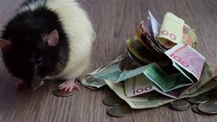 Black-and-white rat washes on coins and banknotes. Currencies around world Stock Footage