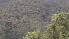 Pan across montane rainforest growing on the slopes of Reventador Volcano Stock Footage