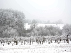 Frozen vineyard and frozen forest, Hungary Stock Footage