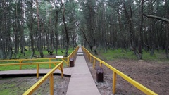 Tracking shot footpath covered with wood planks, yellow hadrails in pine forest Stock Footage