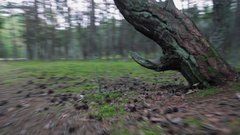Camera fast moving over green moss in pinery forest with crooked tree, low angle Stock Footage