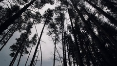 Hight pine trees on edge of sand beach sea shore in a summer cloudy day Stock Footage