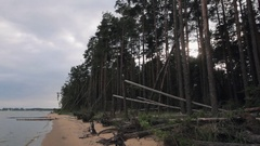 Vast pine trees forest on edge of sandy shore coast line sea in summer evening Stock Footage