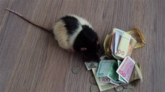 White and black rat walks around coins and banknotes Stock Footage