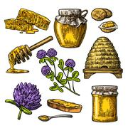 Honey set. Jars of honey, bee, hive, clover, honeycomb. Vector vintage engr.. Stock Illustration