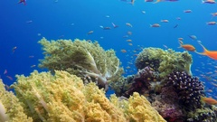 Blue Sea Background with Colorful Tropical Fishes Stock Footage
