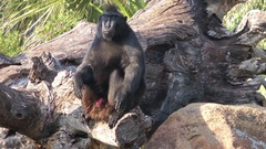 Lonely Monkey Sitting Tree Stock Footage