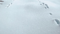 Tilt Up to Animal Tracks in Snow Stock Footage