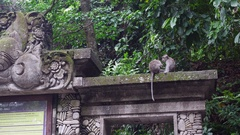 Two cute monkeys in the historic building in the tropical forest of Indonesia. Stock Footage