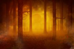 Temperature rise impact to the fires in the forest Stock Photos