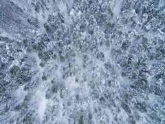 Coniferous forest in snowy winter. Spruces and pines. Aerial view. Stock Footage