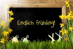 Sunny Narcissus, Easter Egg, Bunny, Endlich Fruehling Means Finnaly Spring Stock Photos