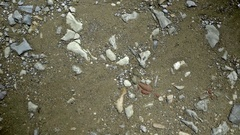Rocks in Sand Background - 25FPS PAL Stock Footage