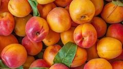 Apricot fruit heap texture Stock Footage