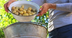 Woman pouring potatoes in bucket Stock Footage