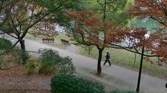 City Park In Fall Season Hiroshima Japan With Autumn Foliage Stock Footage