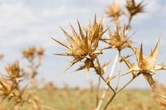 Dry prickly grass against the sky Stock Photos