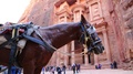 Horse and people near Al Khazneh or the Treasury at Petra in Jordan HD Footage