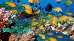 Beautiful Underwater Colorful Tropical Fishes Stock Footage