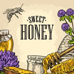 Square poster with honey, honeycomb, jar, spoon, bee. Piirros