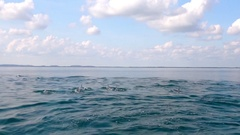 Dolphins swimming, porpoising, jumping out of water, hunting tuna. Sri Lanka Stock Footage