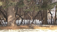 Group of North American Gray Grey Squirrels in City Park Stock Footage